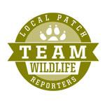 Team Wildlife - Local Patch Reporter