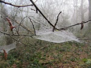 Misty cobweb
