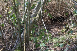 Image of Briar Sett entrance