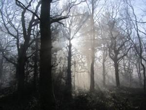 misty-morn2