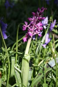 orchid-broken