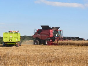 Image of a Combine harvester, oil seed rape