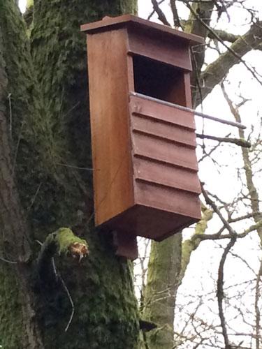 owlbox